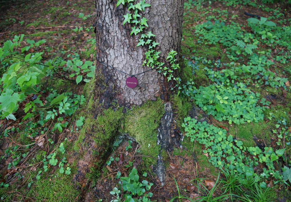Wald der Ewigkeit Kundl Tirol1_Naturbestattung GmbH