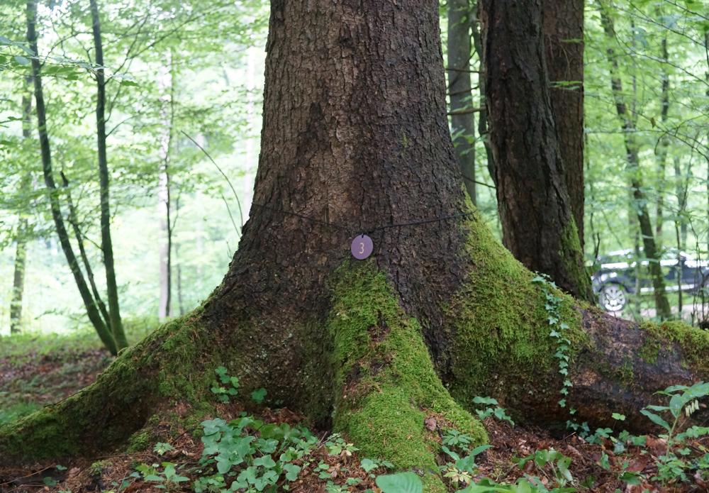 Wald der Ewigkeit Kundl Tirol2_Naturbestattung GmbH