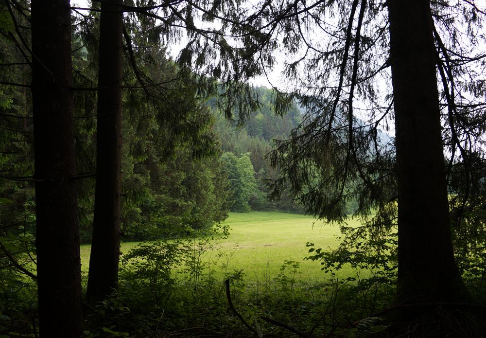Wald der Ewigkeit Kundl Tirol3_Naturbestattung GmbH