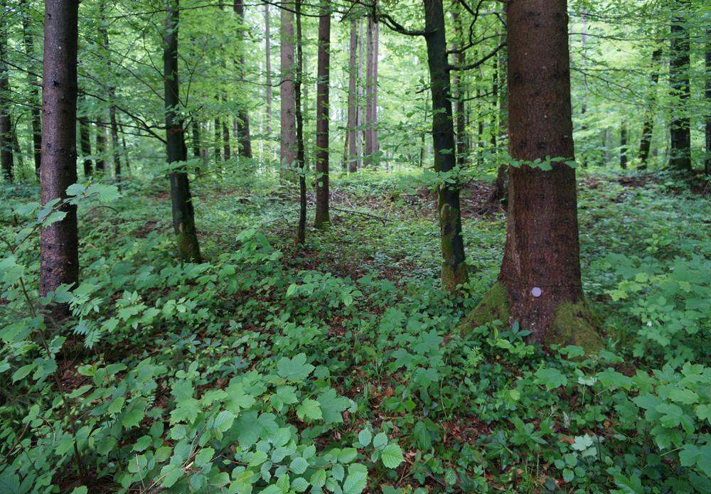 Wald der Ewigkeit Kundl Tirol4_Naturbestattung GmbH