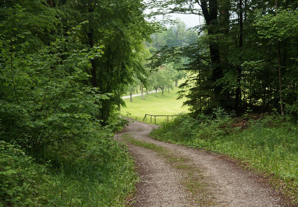 Wald der Ewigkeit Kundl Tirol5_Naturbestattung GmbH