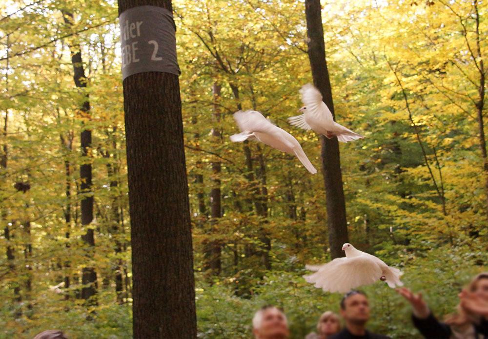 Wald der Ewigkeit im Herbst mit Tauben naturbestattung GmbH