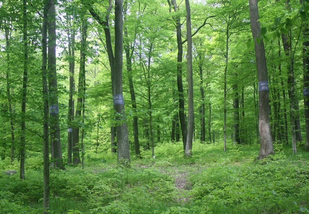 Wald der Ewigkeit_Naturbestattung GmbH