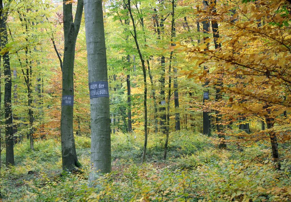 wald der Ewigkeit im Herbst naturbestattung GmbH