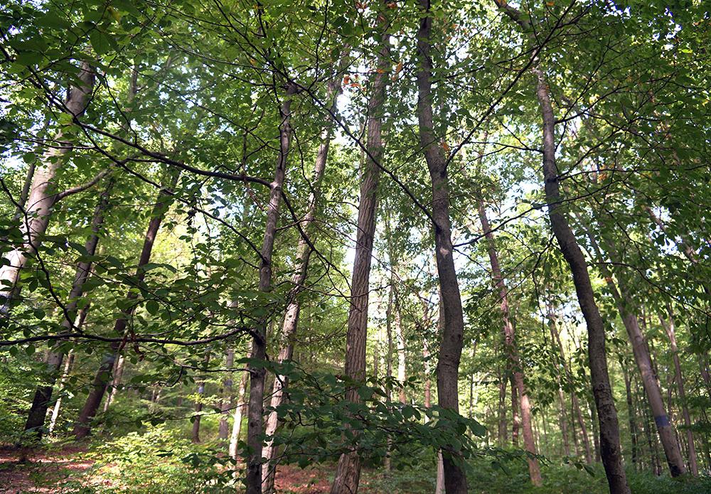 Sternenkind im Wald der Ewigkeit_Baumbestattung_Naturbestattung GmbH5