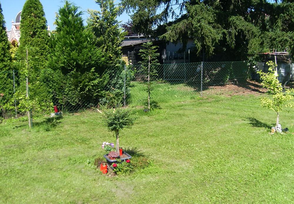 Baumfriedhof Graz Baumbestattung Naturbestattung GmH