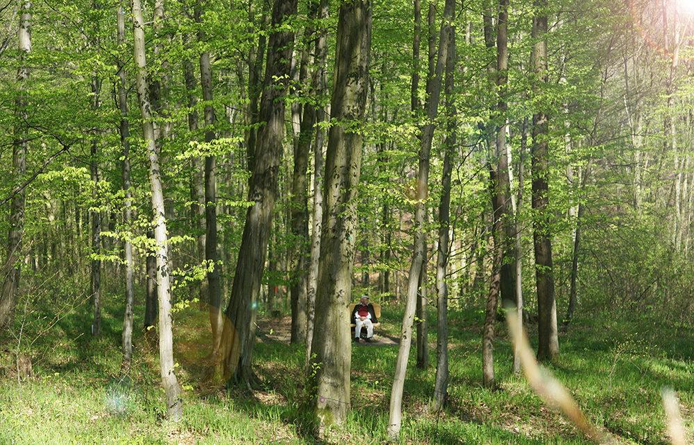 Partnerbaum Baumbestattung im Wald der Ewigkeit in 1140 Wien / Mauerbach Waldfriedhof_Naturbestattung Gmbh Zadrobilek