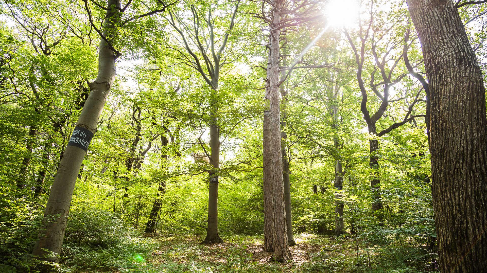 Wald der Ewigkeit Gießhübl Baumbestattung in Mödling Naturbestattung Gmbh Zadrobilek