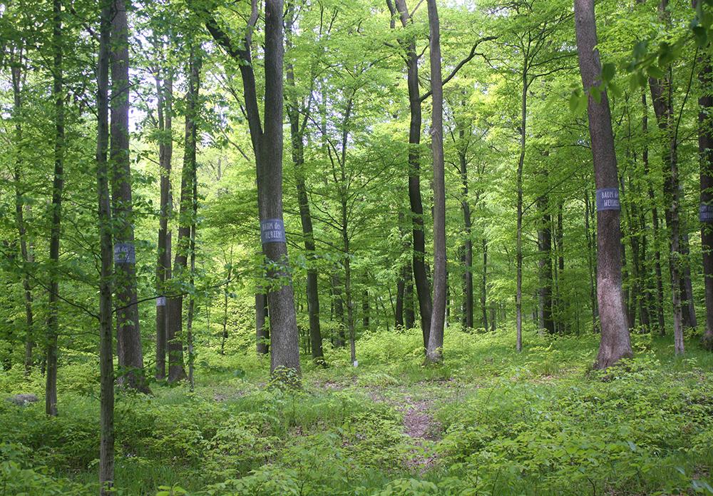 Baumbestattung im Wald der Ewigkeit in 1140 Wien Mauerbach Waldfriedhof_Naturbestattung Gmbh Zadrobilek