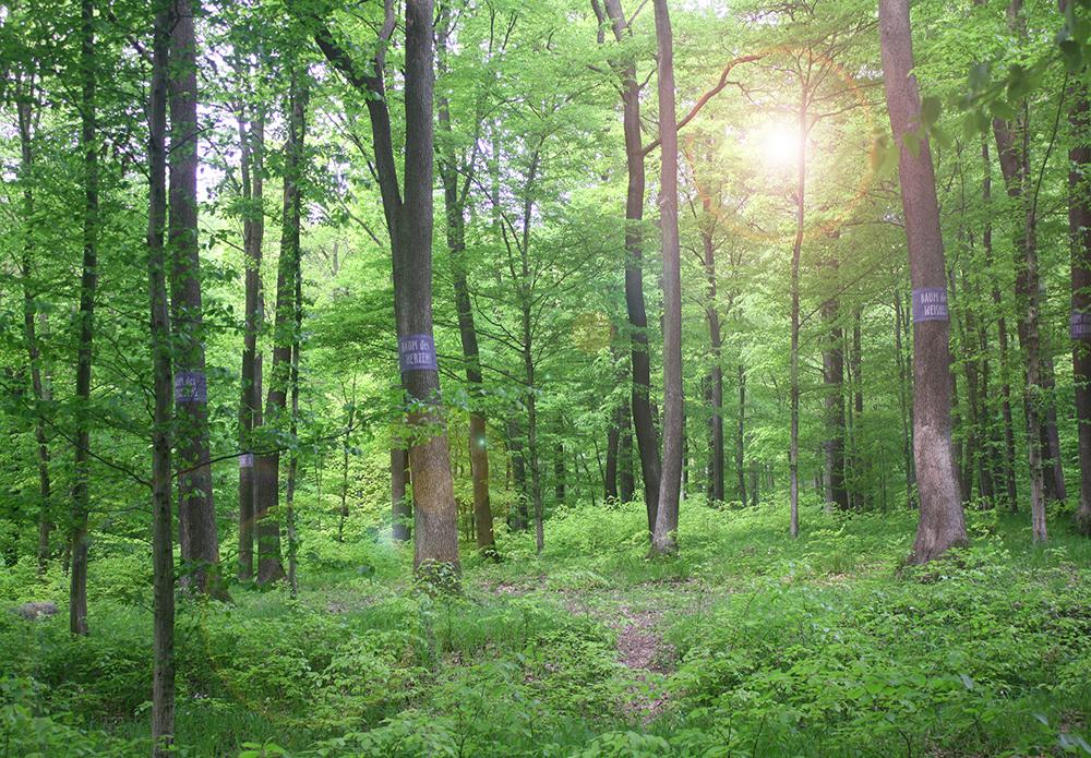 Wald-1140-Wien