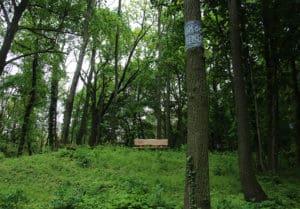 Naturbestattung Baumbestattung am Bisamberg bei Korneuburg Walsfriedhof 1190 Wien In Kooperation mit Naturbestattung GmbH Zadrobilek