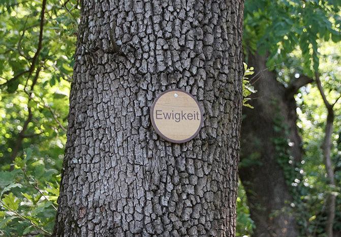 Baumbestattung am Kahlenberger Friedhof Walsfriedhof 1190 Wien In Kooperation mit Naturbestattung GmbH Zadrobilek