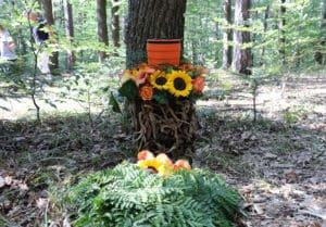 Naturbestattung Baumbestattung Beisetzung am Friedhof Wien Kahlenberger Friedhof_Naturbestattung GmbH Zadrobilek